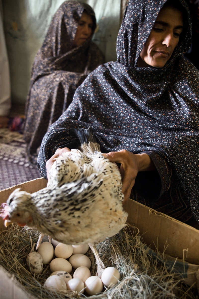 This woman lives in Nimruz province. She is the owner of a few hens. Those hens give her enough eggs to feed her family. She sells the remaining ones to the market. With the money she will be able to buy vegetables, fruits and other food items.