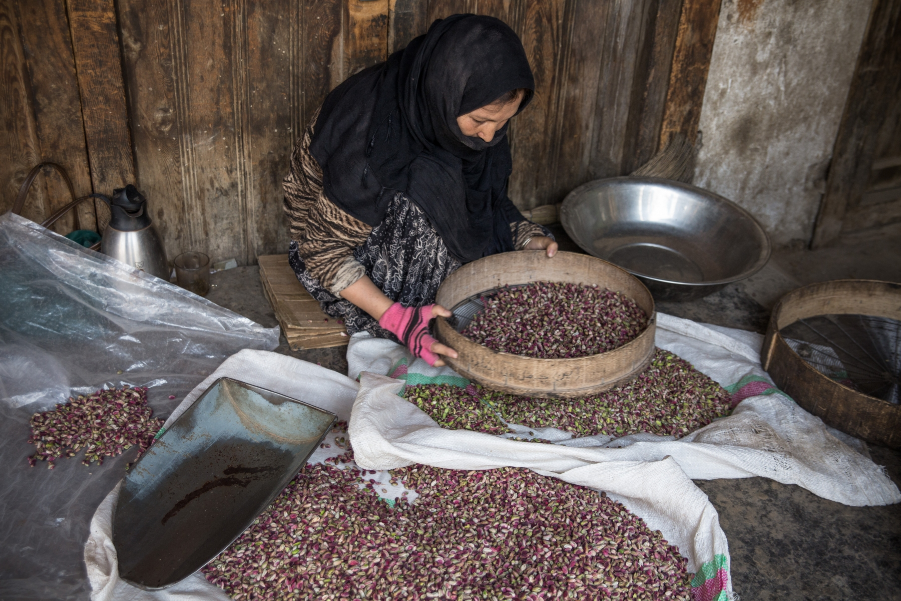 Woman sorting pistachios at the dry fruit market in Kabul