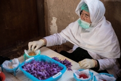 Saffron in Herat
